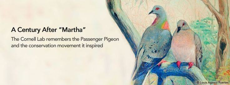 eNews Flash: Passenger Pigeon Centennial in NY Times