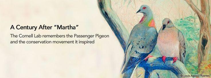 eNews Flash: Passenger Pigeon Centennial in NY Times