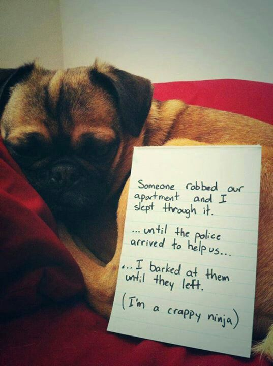 Aww! Poor puggy! :(