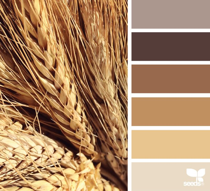 2328 best images about design seeds on pinterest for Best neutral brown paint color