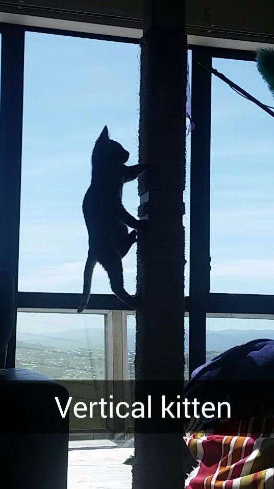 Climbing pole