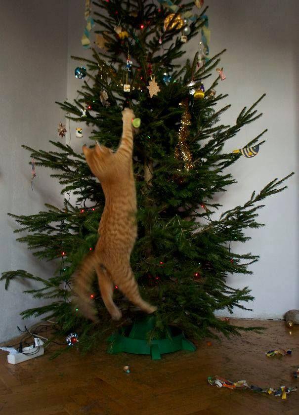 Druk bezig geweest met de kerstboom te versieren… En dan komen de katten eraan!