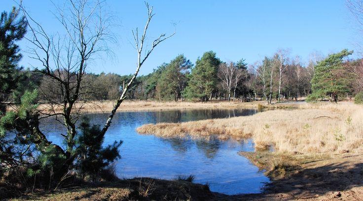 Op de grote stille Strabrechtse Heide -  Bekijk meer foto's op www.reiskrantreporter.nl/reports/5830