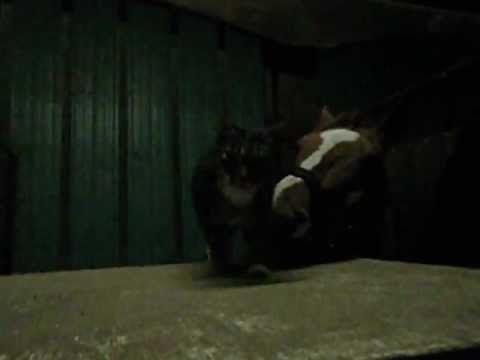 Lovely friendship between horse and cat. :)  Stalkat geeft paard kopjes