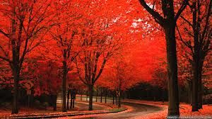 autumn in bright - Google Search
