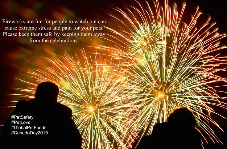 On July 1st, the sky will reverberate with the bangs, pops and flashes that accompany the Canada Day celebrations.  Most people may enjoy the events throughout Canada, and love watching fireworks, but for pets, fireworks, like thunder storms, can cause a great deal of stress. Read our Blog for tips on how to keep your pets safe tonight.