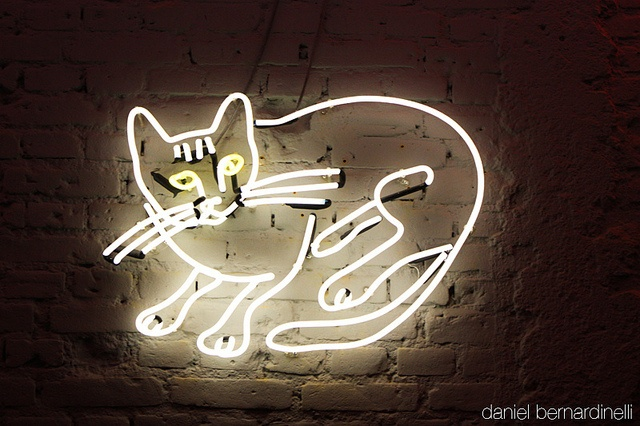cat, light, meow, neon                                                                                                                                                                                 More