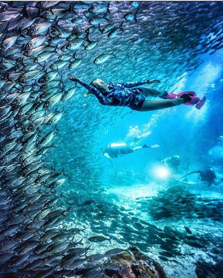 Dance with the fish, move wirh the sea. Let the rhythm of the the water set your soul free. . . Location : Raja Ampat, Papua Barat. Inframe : @marischkaprue   www.tukangjalan.com . . #RajaAmpat #explorerajampat #TijeEscape #rajaampatdive #Indonesia #explorenusantra #tukang_jalan #Exoticindonesia #tjmisoolescape #tukangjalan #tukangjalantrip #jellyfish #wayag #misool #danauuburubur #snorkling #tour #vacations #liburan #instagood #instagram #travelphotography #vsco #jalanjalan #pesonaalam…