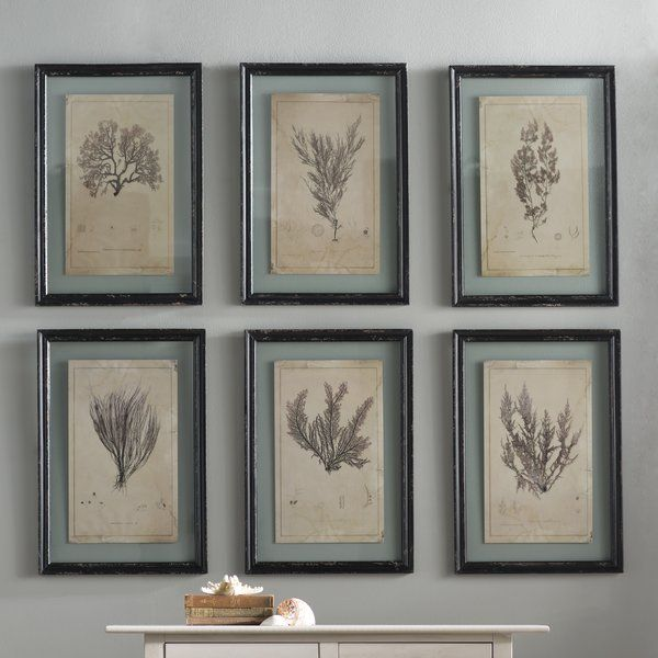 Andros 6 Piece Framed Graphic Art Set Reviews Birch Lane Framed Botanical Prints Coastal Wall Art Traditional Wall Art