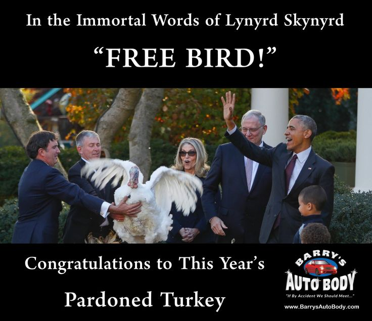 """In the immortal words of Lynyrd Skynyrd.... """"FREE BIRD!"""" The entire staff at barry's Auto Body would like to congratulate this year's pardoned turkey. You go, buddy! http://www.barrysautobody.com?utm_source=Social%20Media&utm_medium=Post&utm_campaign=Barry%20Website&utm_content=Barrys%20-%20Website#utm_sguid=145727,bce22915-c621-9de5-c7ea-00a5007d1128 #Thanksgiving #TurkeyPardon #Obama #Turkey #HappyThanksgiving #StatenIsland #Cars"""