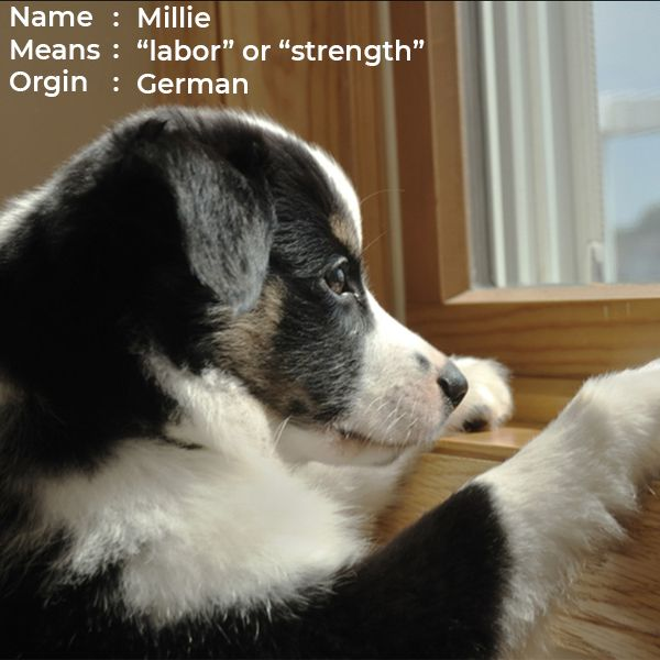 10 Most Popular Female Puppies Names  1 Adeline 2 -2786