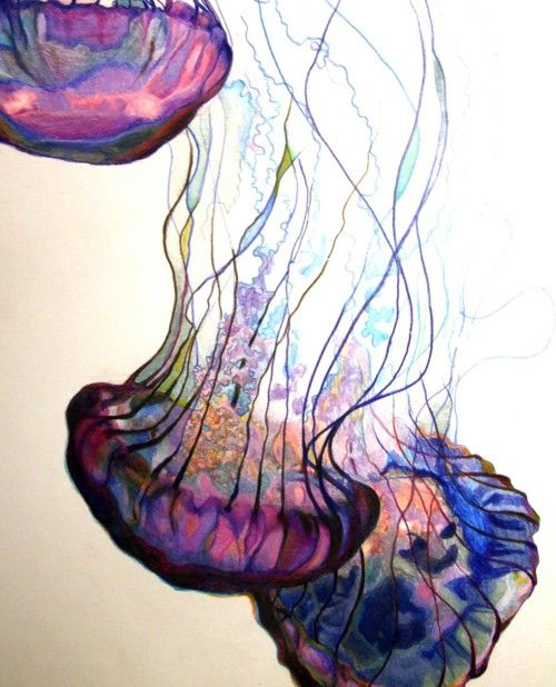 Was just thinking about how I'd love to do a watercolor of jellyfish. This one is quite wonderful