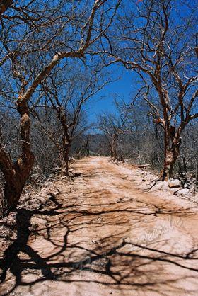 Caatinga-Morro do Chapeu----BRASIL!!!!