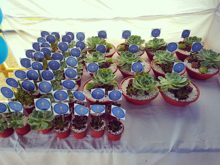 Succulents for souvenir