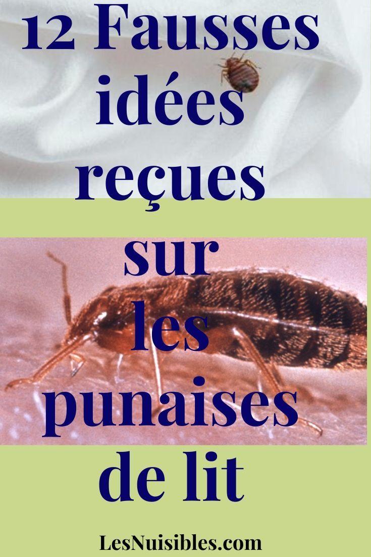 12 Fausses Idees Recues Sur Les Punaises De Lit Punaises De Lit Puce De Lit Traitement Puce De Lit