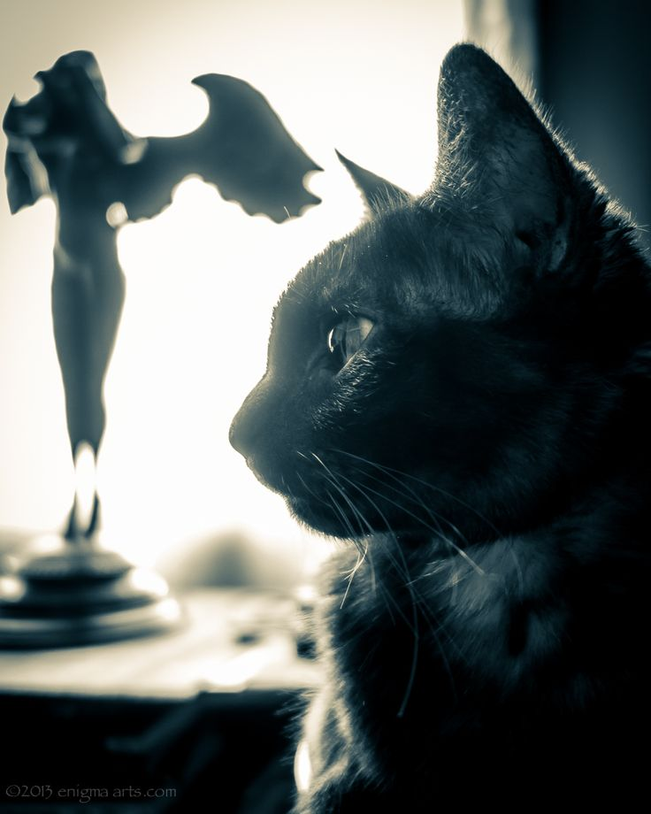 Gothic Kitty and Descending Night.  Please click the photo to visit my brand new website with tons of photos and my videos :-)