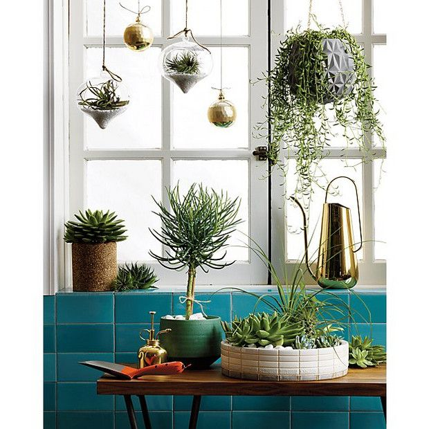 nothing will add whimsy to a room like hanging plants