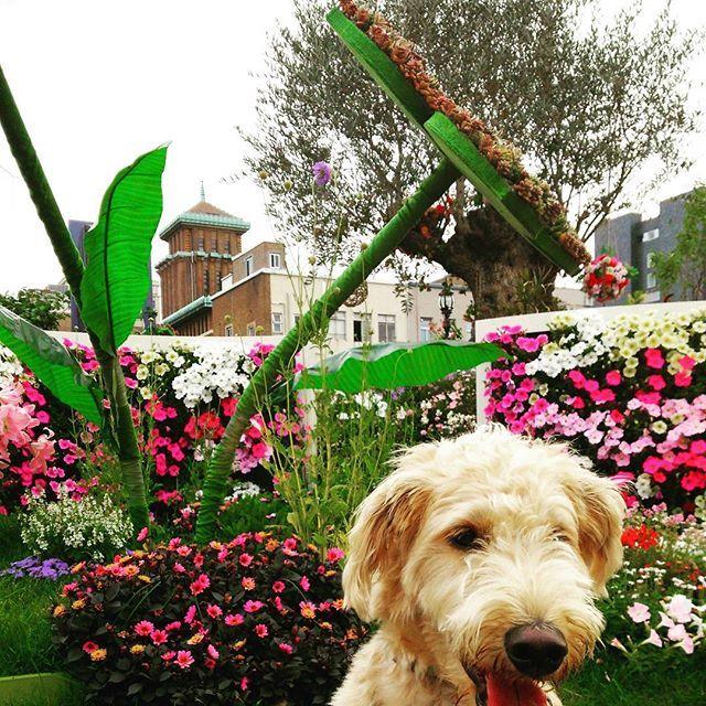 お花とそら  #ガーデンネックレス横浜2017 #神奈川県庁 #象の鼻テラス #花と犬 #犬散歩  #癒し犬#愛犬 #大切な家族 #犬が好き #犬のいる生活