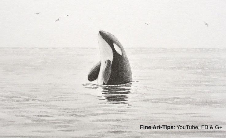 How to Draw a Killer Whale - Orca #art #drawing #FineArtTips #killerwhale #orca #artistleonardo #LeonardoPereznieto #mechanicalpencil Take a look to my book here: http://www.artistleonardo.com/#!ebooks-english/cswd