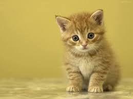 Risultati immagini per gattini piccoli