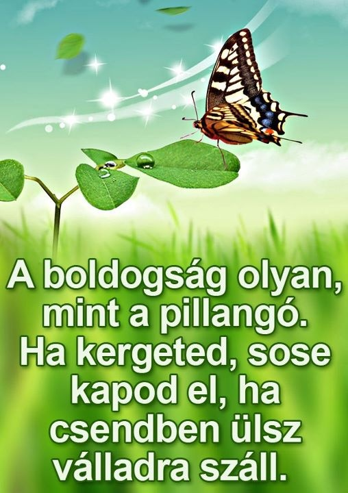 A boldogság olyan, mint a pillangó. Ha kergeted, sosem kapod el, ha csendben ülsz, válladra száll.