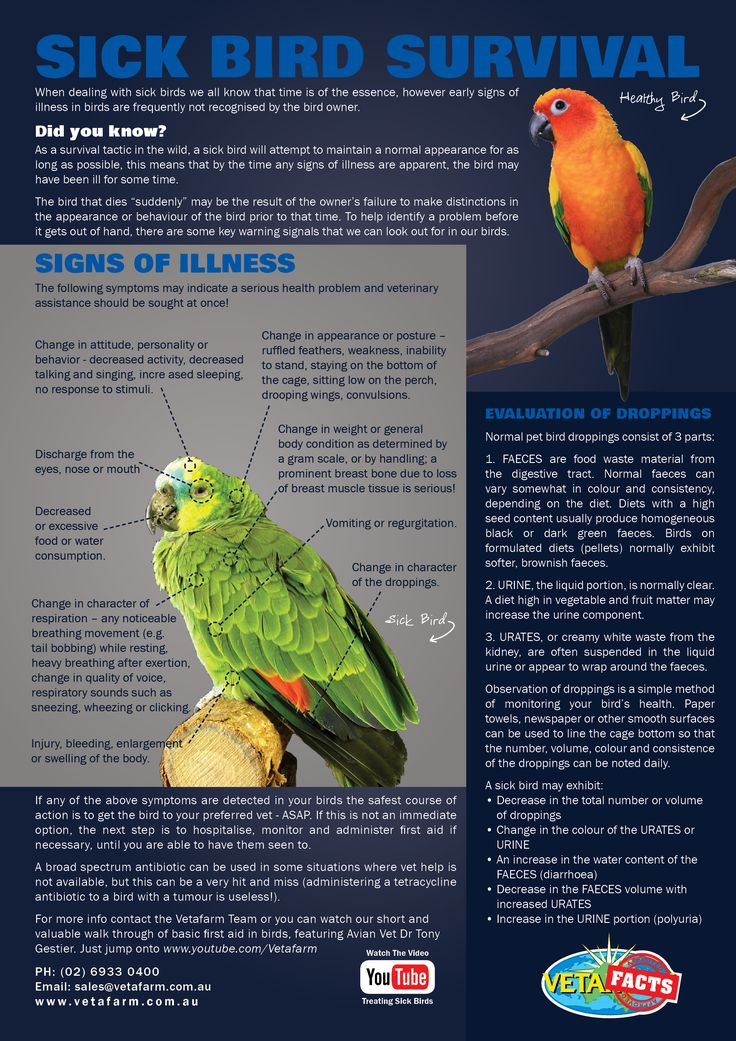 A helpful guide outlining the importance of observation for the survival of a sick bird.  Contact the Vetafarm Team for more info or you can check out our YouTube video on treating sick birds:  http://youtu.be/KRMCpym2PHY  #Vetafacts