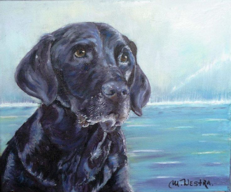 This is a portrait of an old Black lab dog done in oil on canvas by Calgary artist Monique Westra