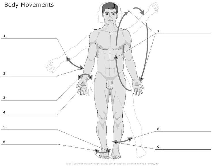 body movements | Human body worksheets, Human body anatomy ...