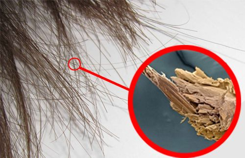 Les pointes fourchues sont la hantise des femmes et, malheureusement, un problème très fréquent.