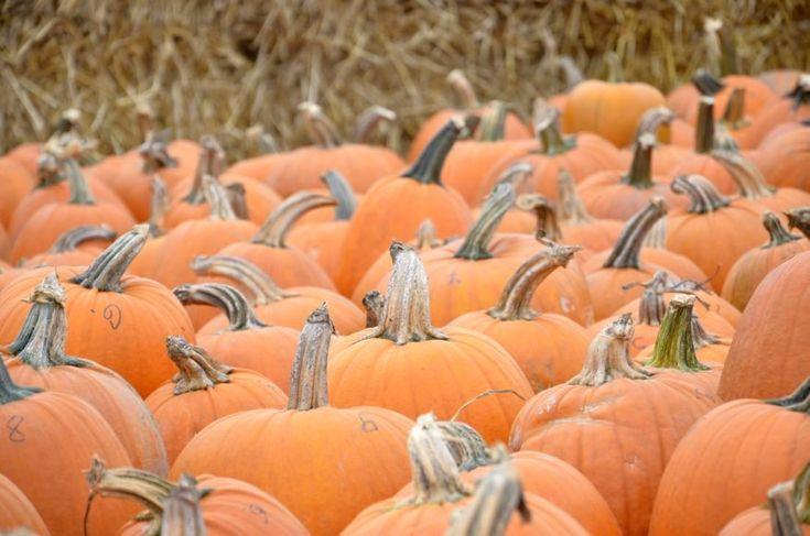 Skład i działanie dyni #dynie #dynia #pumpkin