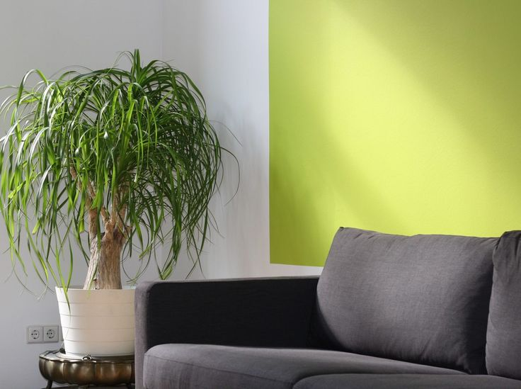 Green is having a designer moment. Lime green, which contains a great deal of yellow, has great potential as a basis for a refined yet inviting living area.
