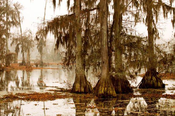 Manchac Swamp (Pantano de Manchac) en los bosques de Luisiana, en Estados Unidos, se esconde el Manchac Swamp o Pantano de Manchac, apodado por muchos como el pantano maldito. Se dice que una poderosa bruja del vudú lanzo un hechizo sobre estas aguas, tras lo cual murieron misteriosamente varios pescadores y exploradores en el pantano. Aquellos quienes se han atrevido a acercarse afirman haber escuchado macabras risas en estos lugares.