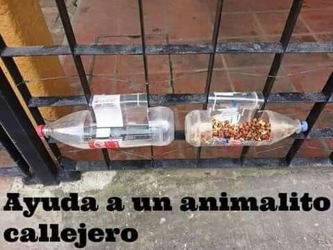 Bebedero y comedero para perros callejeros