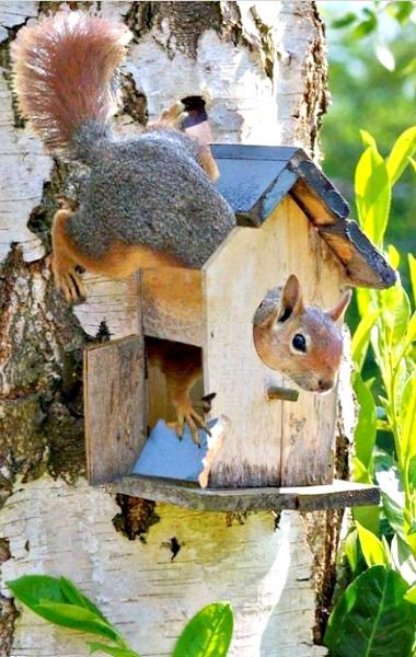 Squirrel in the house (Feelin' Squirrely group board)
