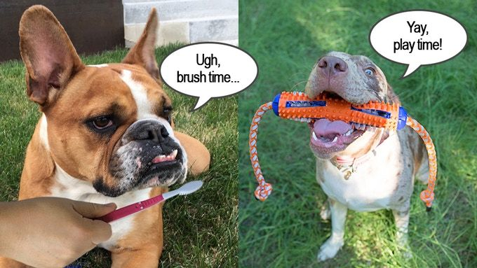 Tug n' Brush on Kickstarter! Best new dog toothbrush/toy! Take care of your …