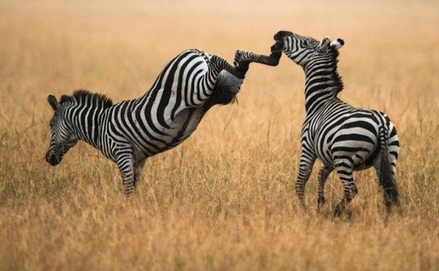 11 entzückende kleine Tiere, die in Ihre Handfläche passen – meowlogy   – Animals