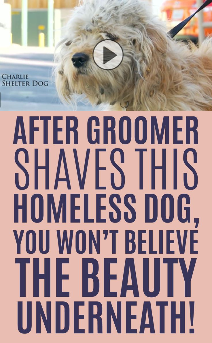 After Groomer Shaves This Homeless Dog, You Won't Believe The Beauty Underneath!!