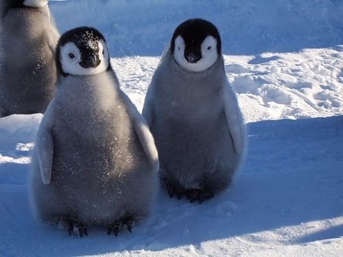 penguin images | Cutes Pets In the World: Penguins are fascinating creatures