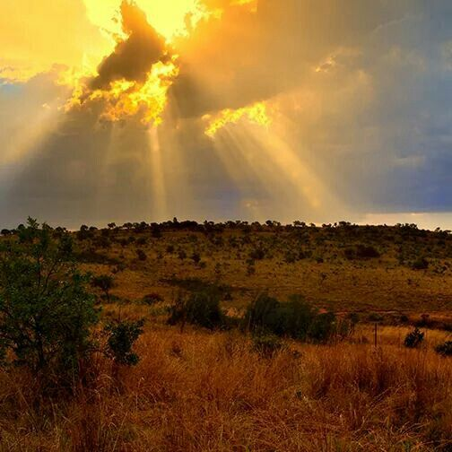In the Cradle of Humankind, Gauteng, the origin of humanity provides a beautiful…