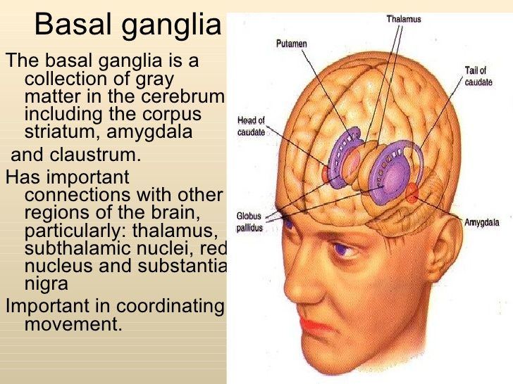 Basal ganglia <ul><li>The basal ganglia is a collection of gray matter in the cerebrum including the corpus striatum, amyg...