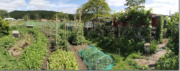 Quality Over Quantity Growing Nutrient Dense Food In