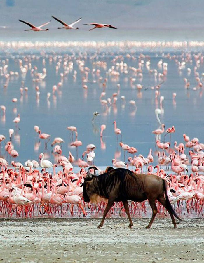 Zanzibar, en Tanzanie Direction l'océan Indien avec Zanzibar pour goûter à ses plages paradisiaques, visiter son bazar local et faire une halte...