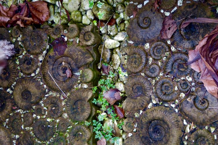 Ammonite path