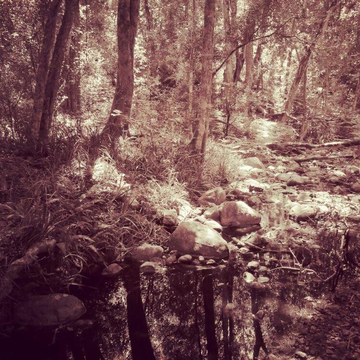 Grootvadersbosch forest