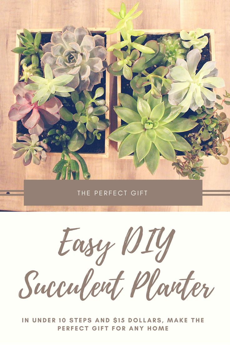 Why a DIY Succulent Planter? This makes the PERFECT gift. In under 10 steps and for less than $15 make the perfect gift or perfect home accent piece