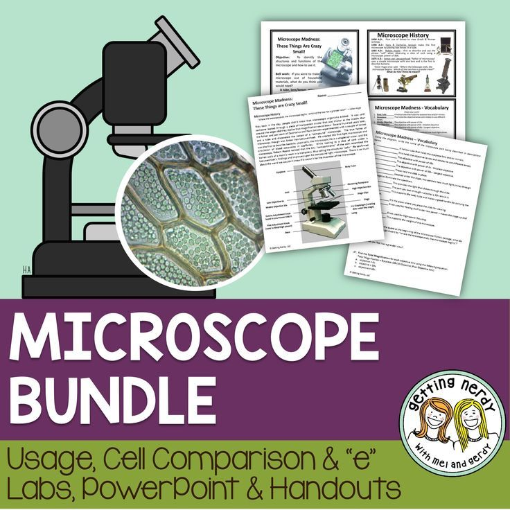 Explore Animal Diversity with Microscope Slides | Carolina.com