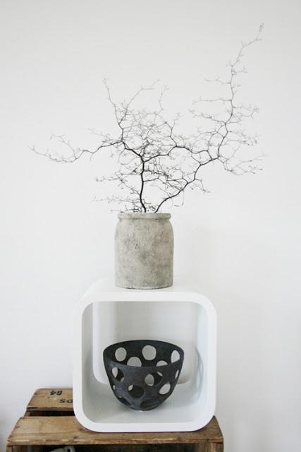my scandinavian home: Plants Corokia silver ghost
