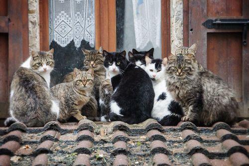theperfectworldwelcome: mel-Katze: Foto di Gruppo (über Bruna Martini) Beautiful !!!  \ O /