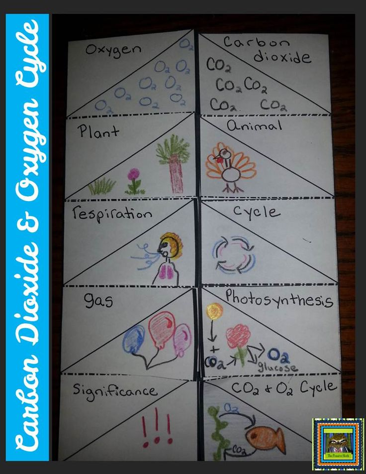 5th Grade Life Science--Carbon Dioxide and Oxygen Cycle Vocabulary Foldable.  Students write the word and draw a picture on the outside flap, then write the definition and examples on the inside.  When finished, students can add this to their science notebooks.