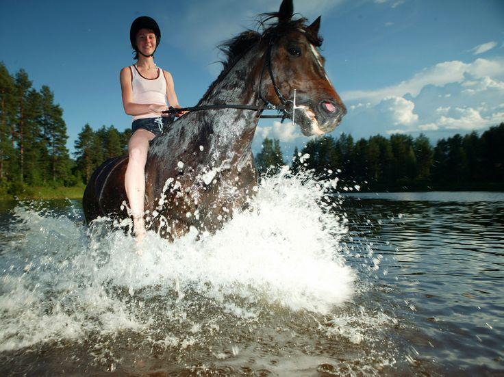 Swimming with horses in Lapland Vuollerim!